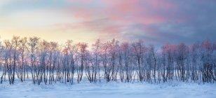 Malerische Aussicht auf Winter Sonnenaufgang über Lappland, Finnland — Stockfoto