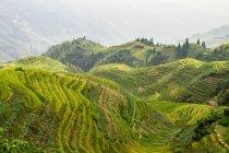 Живописный вид на рисовые террасы, Китай, Гуанси, уезд Луншэн — стоковое фото