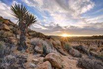 Parco nazionale di Joshua tree al tramonto, California, Stati Uniti d'America — Foto stock