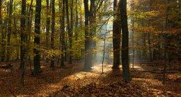 Majestätischer Blick auf schönen Wald mit malerischem Sonnenlicht — Stockfoto