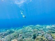Mädchen, Schwimmen unter Wasser mit Schnorchel, Gili Meno, Indonesien — Stockfoto