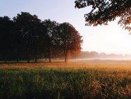 Vue panoramique sur le paysage rural et la brume matinale — Photo de stock