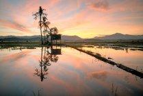 Sunrise over paddy field, Kota Belud, Sabah, Borneo, Malaysia — Photo de stock