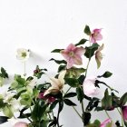 Flores frescas creciendo contra la pared blanca - foto de stock