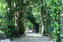 Scenic view of tree lined path, Japan — Stock Photo