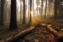 Мальовничим видом біля багаття в лісі, Королівський Каньйон, Каліфорнія, США — стокове фото