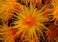 Vista da vicino della coppa arancione corallo sott'acqua — Foto stock