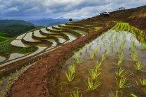 Vista panoramica di terrazze di riso, Mu Cang Chai, Vietnam — Foto stock