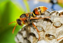 Крупным планом вид осы, охрана куст — стоковое фото