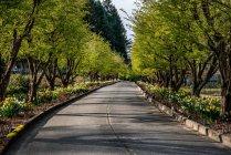 Vista panorámica de vacío arbolada carretera - foto de stock