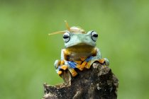 Snail sitting on dumpy tree frog, funny picture concept — Stock Photo