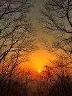 Malerischer Blick auf Äste kahler Bäume bei Sonnenuntergang — Stockfoto