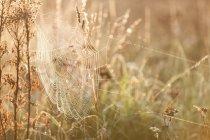 Vista panoramica di ragnatela coperti in rugiada di mattina — Foto stock