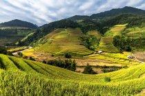 Malerische Aussicht auf die Reisfelder, Mu Cang Chai, Yenbai, Vietnam — Stockfoto