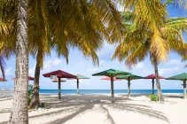 Caribbean sea, Antigua, wooden parasols and palms on beach — Stock Photo