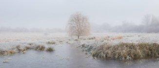 Panoramablick auf Baum und zugefrorenen See in der Nähe von Ely, Cambridgeshire, England, Uk — Stockfoto