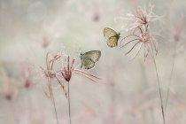 Крупным планом двух бабочек, сидя на растения — стоковое фото