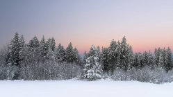 Scenic view of snow covered trees at sunset, Alps, Switzerland — Stock Photo