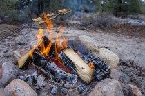 Preparing smores on campfire at nature, closeup — Stock Photo