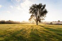 Vista cênica da árvore crescendo no prado na frente da bela luz solar — Fotografia de Stock