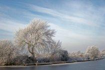 Мальовничим видом дерева вздовж річки, Oldersum, Нижня Саксонія, Німеччина — стокове фото