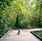 Scenic view of dog sitting on boardwalk — Stock Photo