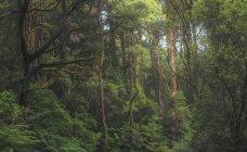 Vista panorámica de la selva, Victoria, Australia - foto de stock