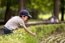 Мальчик собирает лавандовые цветы на лугу — стоковое фото