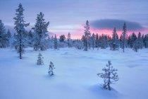 Закат над замороженных зимний пейзаж, Лапландии, Финляндия — стоковое фото