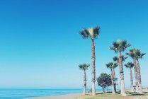Palme sulla spiaggia, Malaga, Andalusia, Spagna — Foto stock