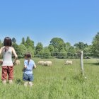 Rear view of two sisters looking at sheep at nature — Stock Photo