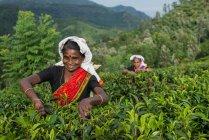 Portrait of two women walking through a tea plantation, Sri Lanka — Stock Photo