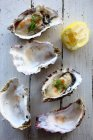 Fresh oysters with dill and lemon on white wood — Stockfoto