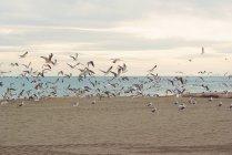 Flock of seagulls on sandy beach, Malaga, Andalucia, Spain — Stock Photo