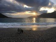 Vue panoramique du chien sur la plage au coucher du soleil — Photo de stock