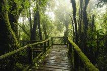 Ponte attraverso il parco nazionale di Doi Inthanon, Chiang Mai, Thailandia — Foto stock