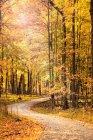 Sentiero in bella foresta autunnale con foglie cadute — Foto stock