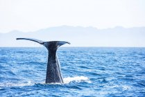Close-up of Fluke tail over ocean water — Stockfoto