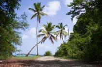 Palm trees on footpath at sunny day, Antigua and Barbuda, Caribbean Sea, Antigua — Stock Photo