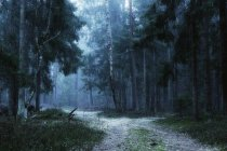 Scenic view of path through forest in fog, Lithuania — Stock Photo