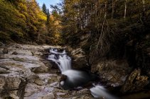 Scenic view of stream in autumn forest — Stock Photo