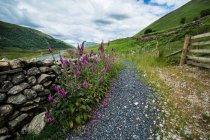 Stone wall and wildflowers on path in mountains, Lake District, Cumbria, England, UK — Stock Photo