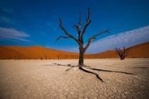 Vista panoramica di Deadvlei, Parco nazionale di Namib Naukluft, Namibia — Foto stock