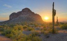 Estados Unidos, Arizona, las montañas de Eagletail desierto, amanecer de la primavera en el desierto - foto de stock