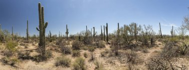 Vista panorâmica do Parque Nacional de Saguaro, EUA, Arizona, Tucson — Fotografia de Stock