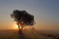Дерево на лугу подсвечено восходящим солнцем — стоковое фото