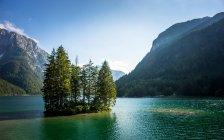 Italia, árboles formando la isla en el lago de montaña - foto de stock