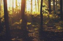 Malerische Aussicht auf den Wald im Sonnenlicht, Brugge, Belgien — Stockfoto
