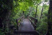 Vista panoramica del ponte in legno nel bosco — Foto stock