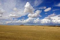 Vista panoramica del campo di grano e cielo azzurro con nuvole — Foto stock